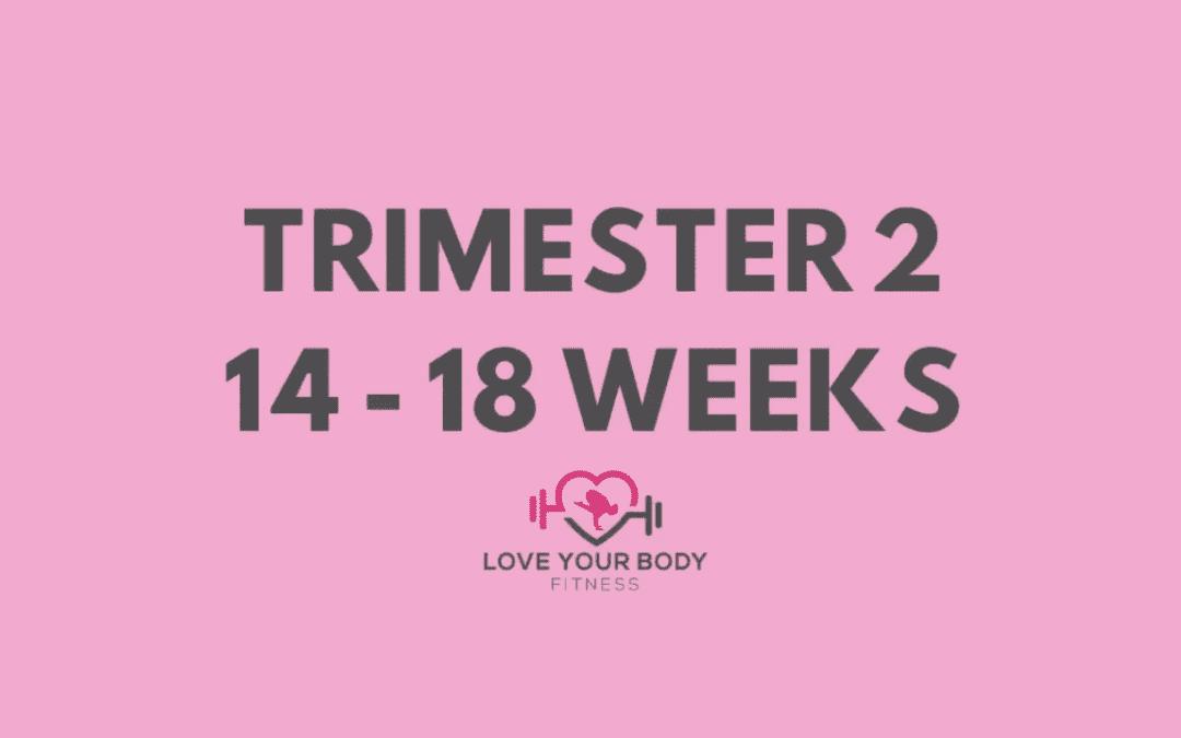 Trimester 2: 14-18 Weeks